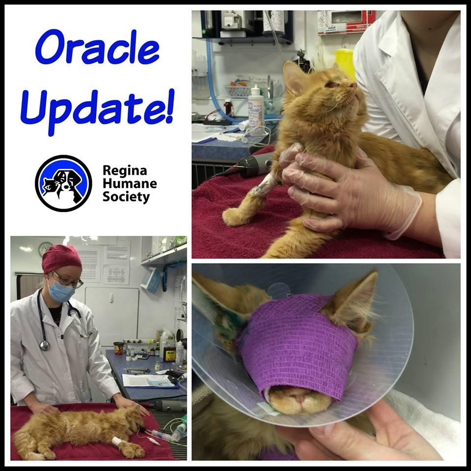 Fundraiser by Karen Mercier : Help Oracle Receive Eye Surgery