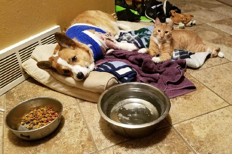 Spendenkampagne von Jessica Stoughton: Help our family dog, Frodo