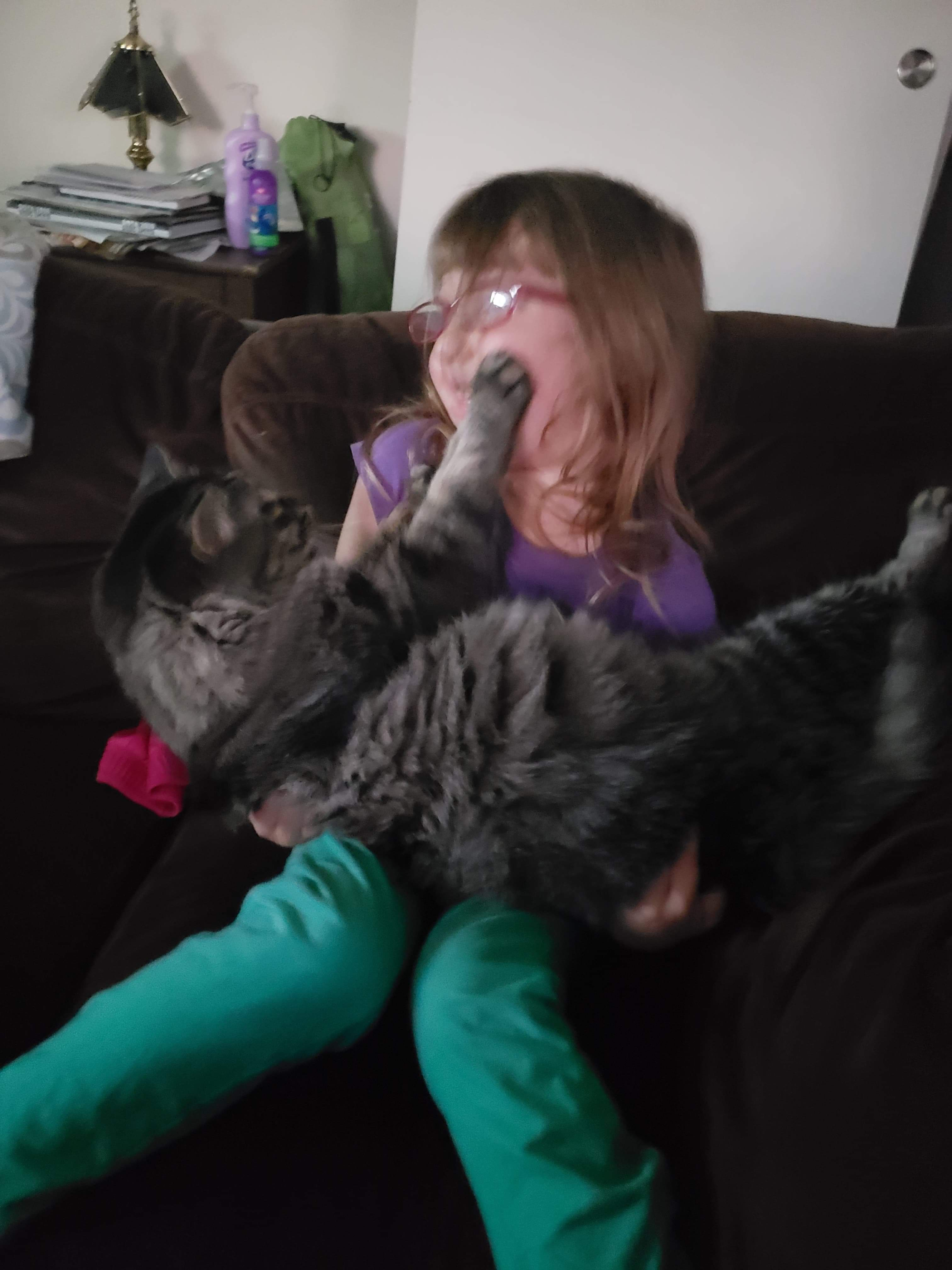 Fundraiser by Dustin Hilderbrand : Help Us Bury Our Cat